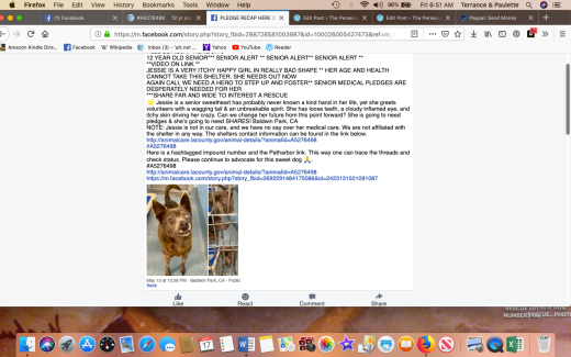 Jessie 3 rescued Screen Shot 2019-05-17 at 6.51.54 AM
