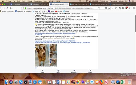 Jessie 3 rescued Screen Shot 2019-05-17 at 6.51.54 AM