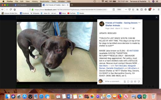 Maisie rescue Screen Shot 2019-05-17 at 11.07.49 AM