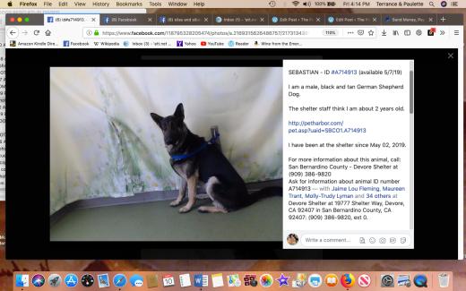 Sebastian 2 rescued Screen Shot 2019-05-10 at 4.14.40 PM