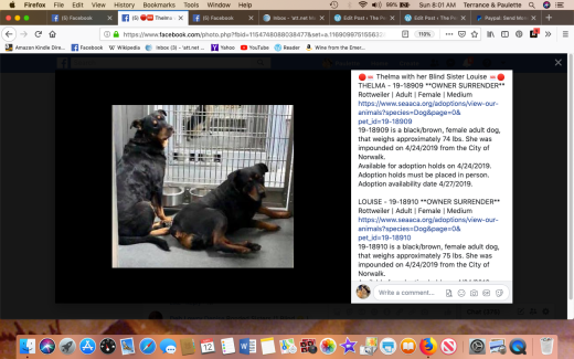 Thelma 2 & Louise rescued Screen Shot 2019-05-12 at 8.01.08 AM