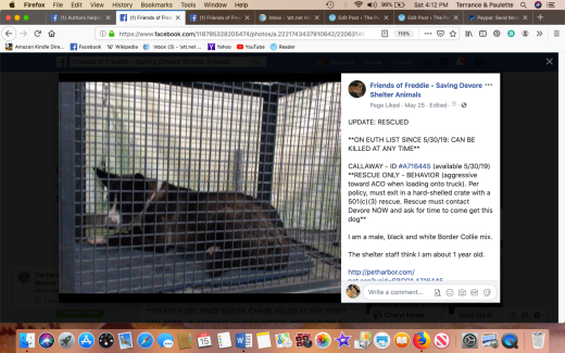 Callaway rescued Screen Shot 2019-06-15 at 4.12.23 PM