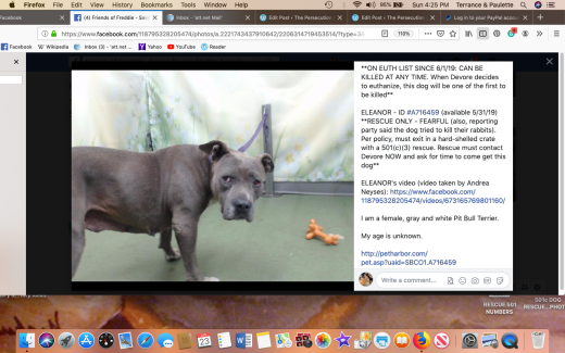 Eleanor 3 rescued Screen Shot 2019-06-23 at 4.25.23 PM