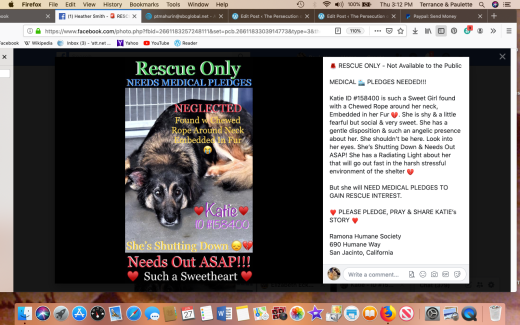 Katie rescued Screen Shot 2019-06-27 at 3.12.47 PM