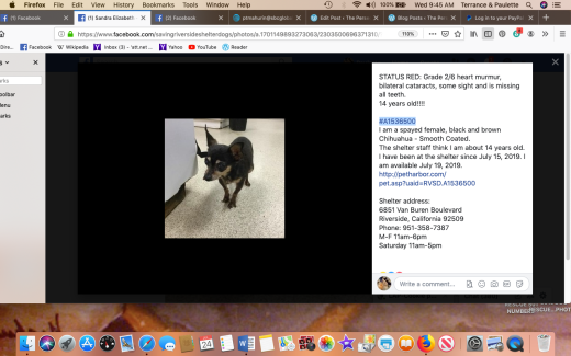 Cookie 9 aka #A1536500 rescued Screen Shot 2019-07-24 at 9.45.44 AM