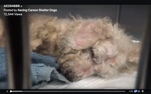 Fluffy rescued shelter photo Screen Shot 2019-07-20 at 12.54.28 PM