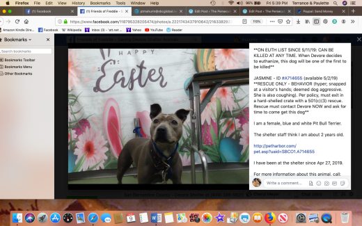Jasmine 4 rescued Screen Shot 2019-08-09 at 5.39.32 PM