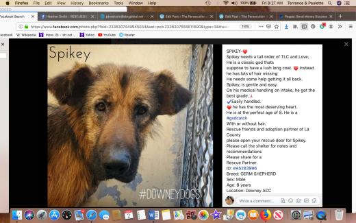 Spikey rescued Screen Shot 2019-08-02 at 8.27.08 AM