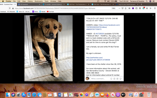 Amber 3 rescued Screen Shot 2019-12-31 at 5.36.19 AM