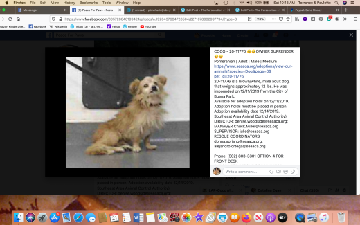 Coco 9 rescued Screen Shot 2019-12-21 at 10.18.54 AM