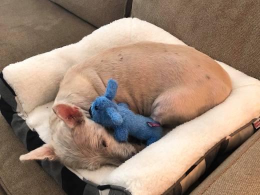 Finn 2 comfy in new home sweet home