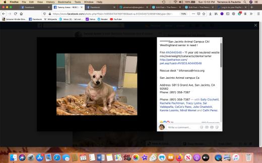 Finn 2 rescued Screen Shot 2019-12-22 at 12.53.51 PM