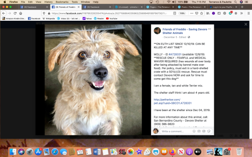 Molly 4 rescued Screen Shot 2019-12-12 at 7.15.49 PM