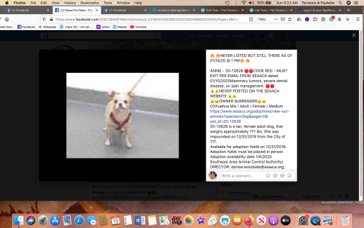 Annie 3 rescued Screen Shot 2020-01-19 at 9.23.18 AM