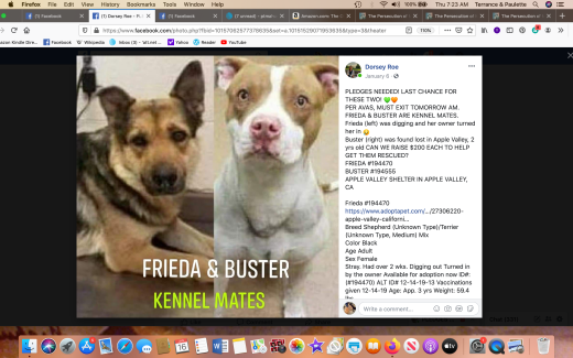 Buster 3 & Frieda rescued Screen Shot 2020-01-16 at 7.23.26 AM
