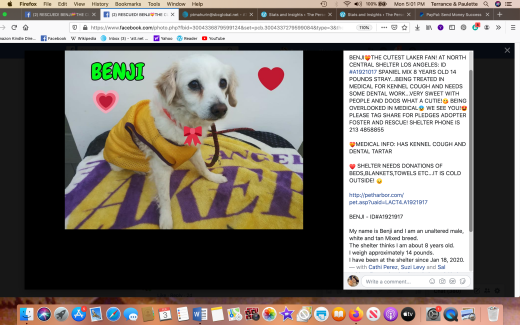 Benji rescued Screen Shot 2020-02-03 at 5.01.43 PM