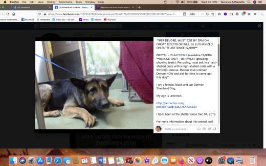 Gretel rescued Screen Shot 2020-02-12 at 3.41.58 PM