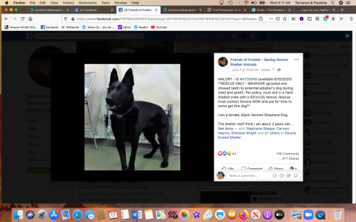 Mallory 2 rescued Screen Shot 2020-06-17 at 8.11.19 AM