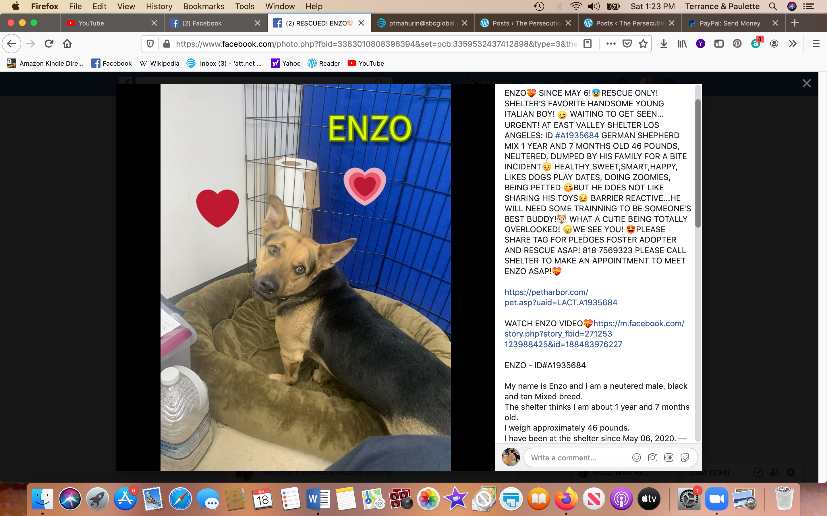 Enzo rescued Screen Shot 2020-07-18 at 1.23.02 PM