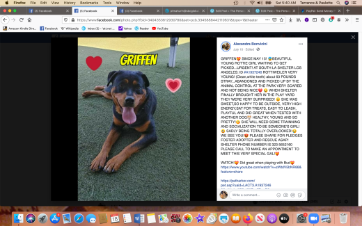 Griffen 1 rescued Screen Shot 2020-07-18 at 5.40.45 AM