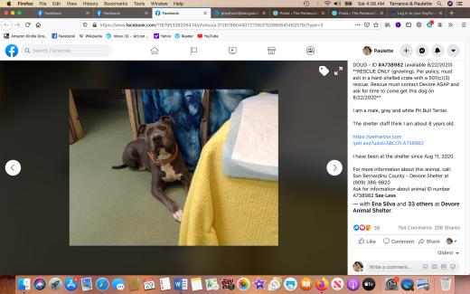 Dog rescued Screen Shot 2020-08-29 at 4.38.07 AM
