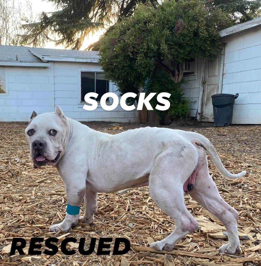 Socks freedom